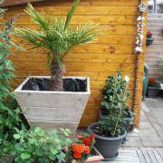 bloembak--plant